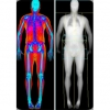 DEXA Scanning and Determining Your Current Muscle Weight